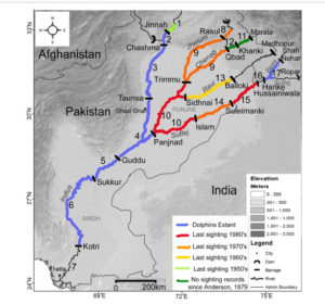 Lost Indus dolphins in the Beas River, India – IUCN – SSC ...